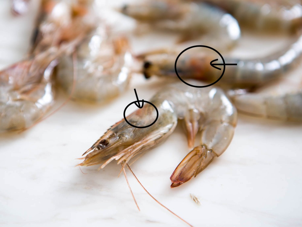 20150806-shrimp-guide-vicky-wasikx-9